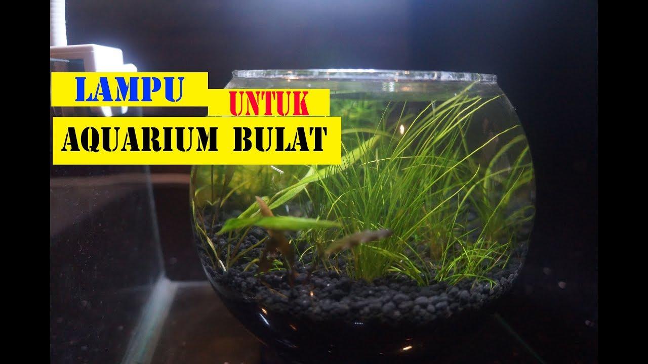 Lampu Untuk Aquarium Bulat Aquascape Murah Meriah Youtube