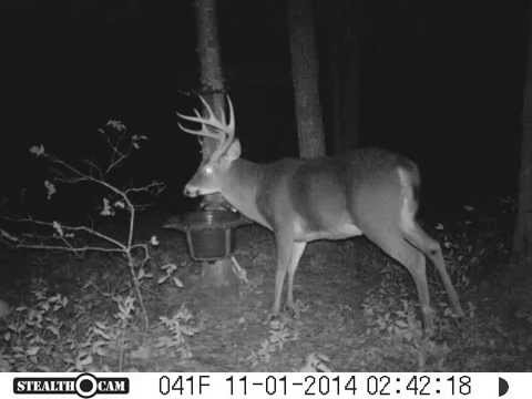 Huge Deer At The Rack Trap Shed Hunting Has Started