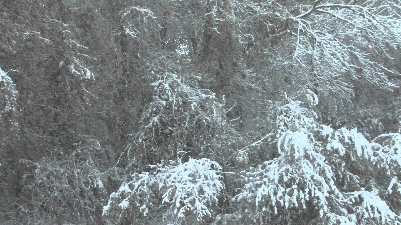 Snowing (Free Stock Footage)