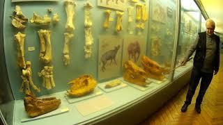Почему Вымерли Древние Животные? Лекция в Природоведческом Музее в Киеве.