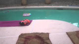 Bichon Frise Dog Water Rescue Training