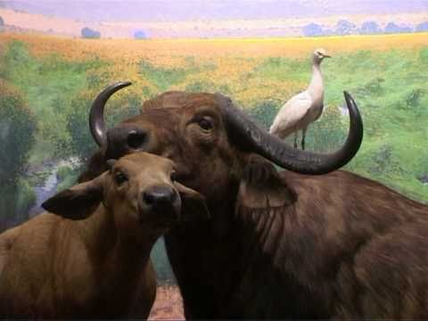 American Museum of  Natural History | New York |