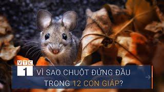 Vì sao chuột đứng đầu trong 12 con giáp? | VTC1