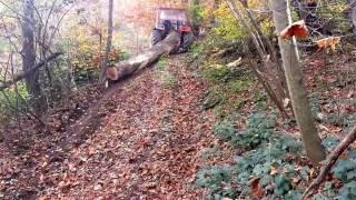 IMT 558 u sumi - IMT 558 In the Woods