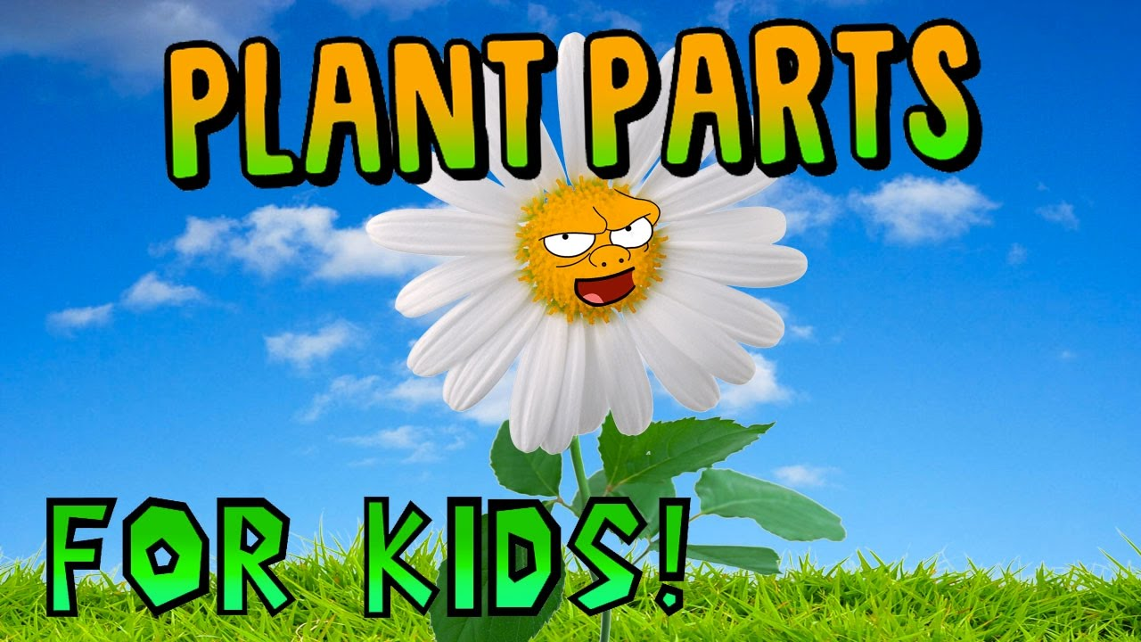Plant Parts for Kids! - YouTube