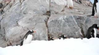 Penguins At Neko Harbor