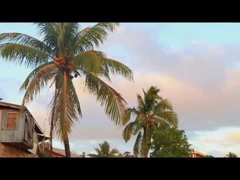A 5 min relaxing video still in the south pacific island of Tonga