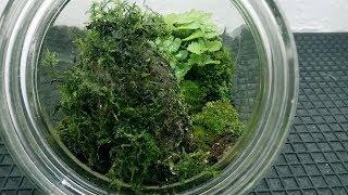 Terrarium of tropical plants in candy jar