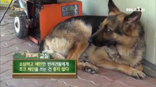 세상에 나쁜 개는 없다 - 군견 샤넬의 민생 적응기