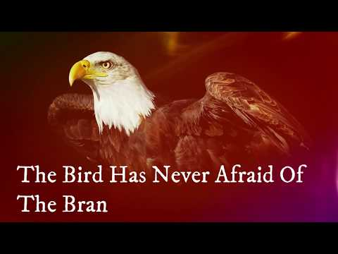 Motivational Short Story About Birds // Whatsapp Status Video // BELIEVE In Yourself // 30Sec Cuts