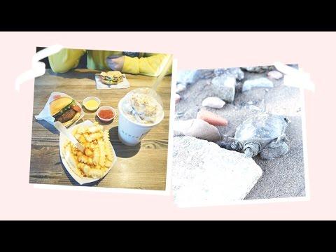 🍟 Nejlepší burger a mrtvá želva 🐢 / NYC / NotSoFunnyAny