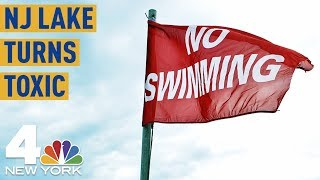NJ Lake Turns Toxic; Officials Say Don't Even Touch It | NBC New York