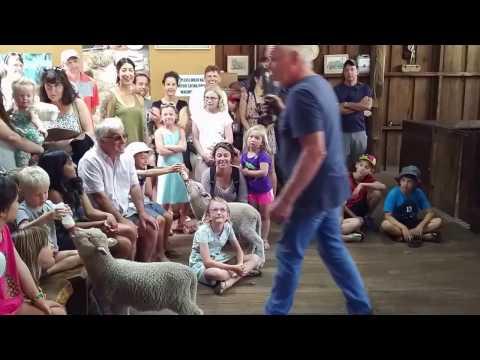 Yallingup Shearing Shed 02 January 2017 Live Show Part 3/3