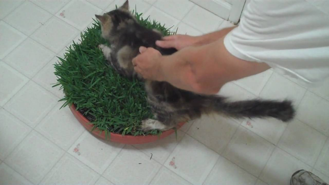 How To Make A Cat Grass Bed   YouTube