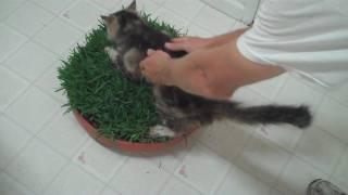 كيفية جعل القط العشب السرير