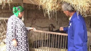 Privatisation en Asie Centrale -- Victoire des vétérinaires contre la brucellose