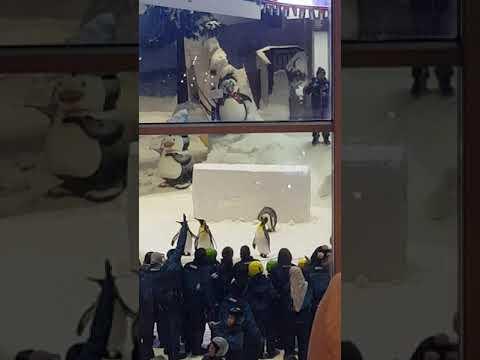 Snow Penguins at Ski Dubai Mall of the Emirates with Shareshth Juneja