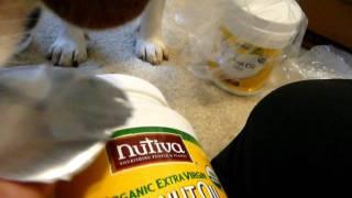 Bailey Beagle Enjoys Coconut Oil