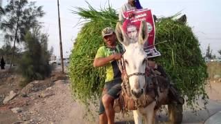 عربة كارو تعلق دعاية لمرسي بمركز أجا