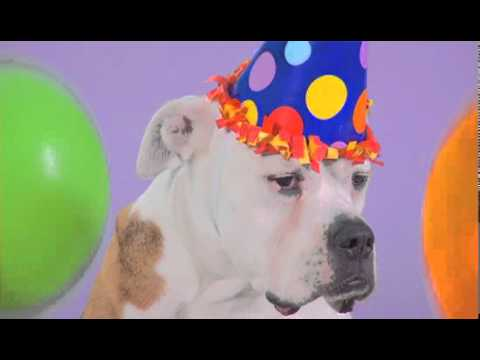Woofy birthday ecard at yahoo greetings youtube woofy birthday ecard at yahoo greetings m4hsunfo