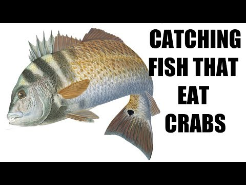 Catching Fish That Eat Crabs (Episode 3 Redfish And Fun, Ft. Jettie Rocks)