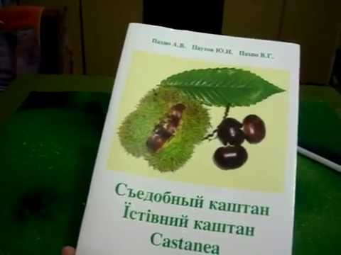 Экстракт семян конского каштана, эсцин: Венен, Венитан