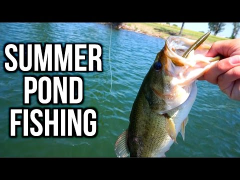 Summer Bass Fishing in Ponds - VLOG