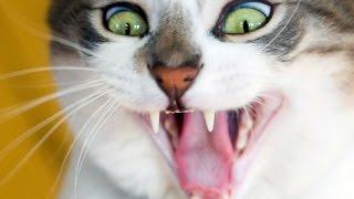 Приколы про кошек самые смешные)
