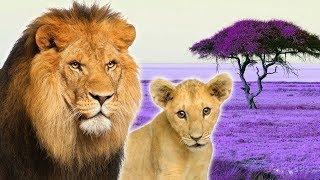 Big Cats for Kids - Animals for Kids - Lion, Tiger, Leopard, Jaguar and more