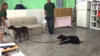 Service Dog Training For Autism - Dog Training Miami