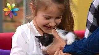 видео Как выбрать кота для ребенка
