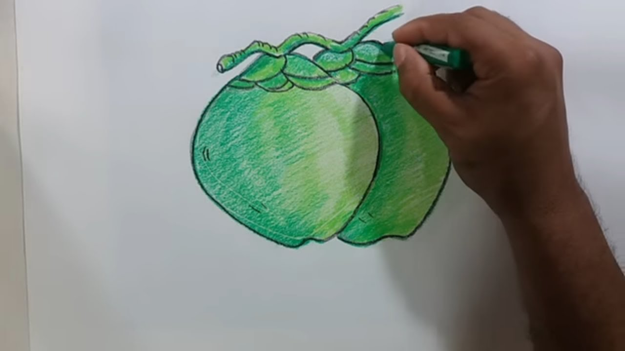 How TO Draw Green Coconut Step By With Coloring