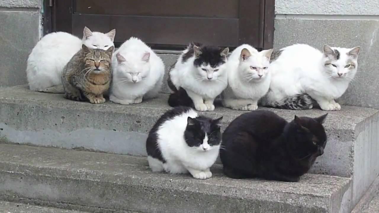 ネコの集会(短編) - YouTube