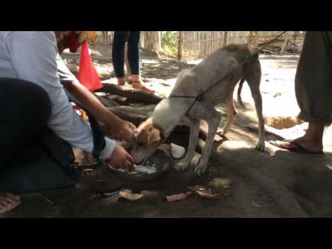 The Story of Nena - Dog Rescue Philippines