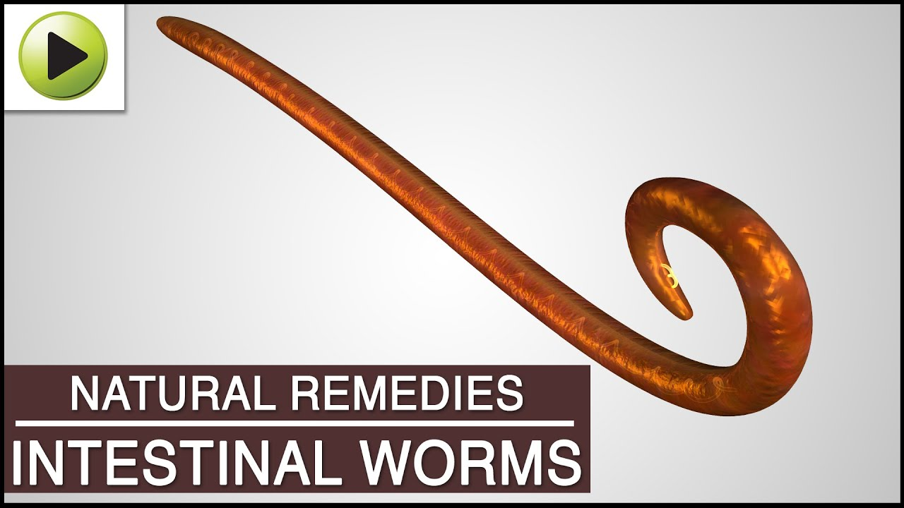 Intestinal Worms In Humans Natural Treatment