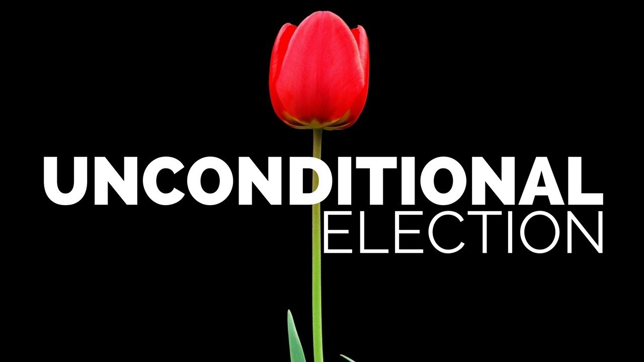 Image result for election and tulip