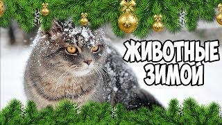Животные зимой - кот верхом | Bazuzu Video ТОП подборка декабрь 2017