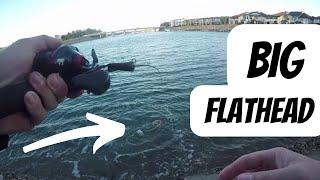 Big Flathead in the Hastings river port macquarie Fishing
