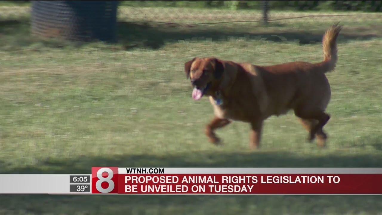 Proposed animal rights legislation to be unveiled - Dauer: 24 Sekunden