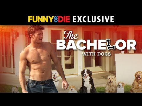 Jake Dill - The Bachelor (with Dogs)