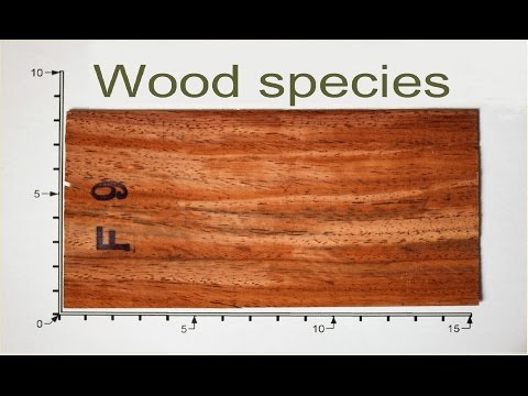 Different wood species - Over 90 woodspecies!!