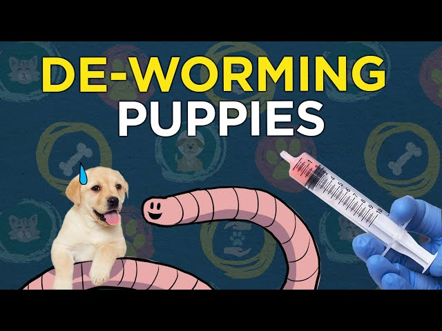 De-worming Puppies