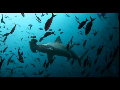 Scientists Warn of Mass Extinction for Earth's Oceans! It's On Us to Reverse the Damage!
