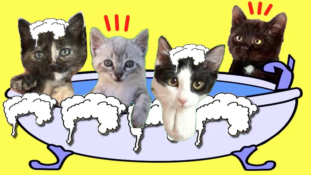 Gatos Luna y Estrella en el primer baño de espuma de las gatitas / Videos de gatitos
