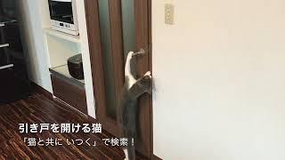 引き戸のドアを開ける猫 thumbnail
