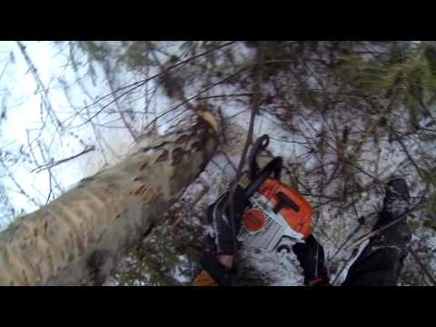 Making firewood and thinning larches