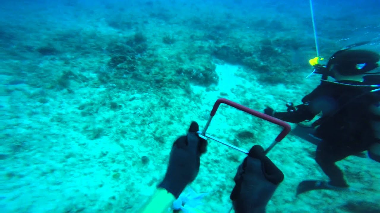 West Palm Beach Spearfishing Scuba