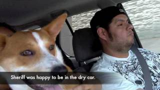 A true story about a family and a car ride loving foxhound. Made wi...