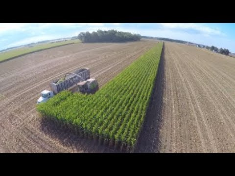 Corn Silage Chopping at Next Generations Dairy - September 2017