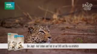 Die Jagd - Auf Leben und Tod: Leopard - Clip [HD] Deutsch / German